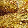 Windblown Grass by Raette Meredith