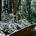 Winding Forest Trail In Winter Snow by Phill Petrovic