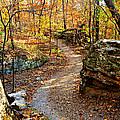 Winding Trail by Marty Koch