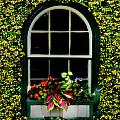 Window On An Ivy Covered Wall by Bill Cannon