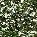 Window Onto Dogwood Blossoms  by Jeff Lowe