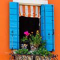 Window Plants by Jon Berghoff