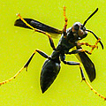 Window Wasp by Brian Stevens