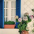 Window With Flowers by Joana Kruse
