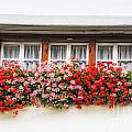 Windows With Red Flowers by Mats Silvan