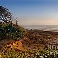 Windswept Coast by Jill Battaglia