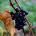 Wine In Time by LeeAnn McLaneGoetz McLaneGoetzStudioLLCcom