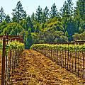Winery by Elizabeth Alamillo