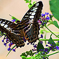 Wing Of Beauty by Cheryl Cencich