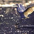 Wingdance by Alistair Lyne