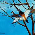 Wingin'  It by Fram Cama