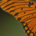 Winging It by Kim Henderson