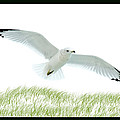 Wings by Greg Fortier