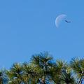 Wings Over Moon by Marx Broszio