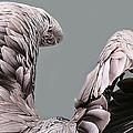 Wings by Paulette Thomas
