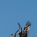 Wings Up by Alistair Lyne