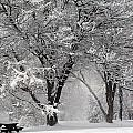 Winter 0002 by Carol Ann Thomas