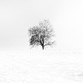 Winter by Bill Cannon