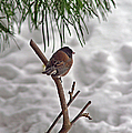 Winter Bird by Randy Harris