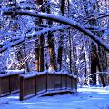 Winter Bridge by Cheryl Cencich