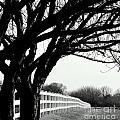 Winter Cherry by Beth Phifer