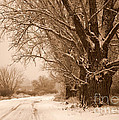 Winter Country Road by Carol Groenen