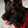 Winter Dog by Karol Livote