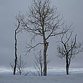 Winter Elegance Too by Ernie Echols