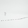 Winter Fence by Lee Doyle
