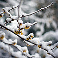 Winter Fleurs by Mike Reid