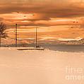 Winter Flight by Tara Turner