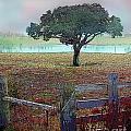 Winter Fog by David Carter