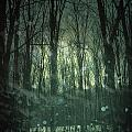 Winter Forest At Twilight by Sandra Cunningham