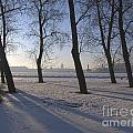 winter forest Peterburg by Yury Bashkin