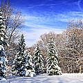 Winter Forest With Snow by Elena Elisseeva