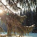 Winter by Franz Roth