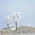 Winter Frost by Julie Palencia
