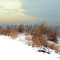 Winter Grasses In Snow by Anne Ferguson