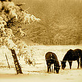 Winter Grazing by Arthur Barnes