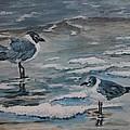 Winter Gulls by Karen Layne