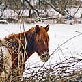 Winter Horse Landscape by Steve Karol