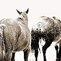 Winter Horses by Megan Chambers