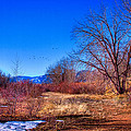 Winter In South Platte Park by David Patterson