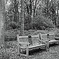 Winter In The Park by Mizanur Rahman