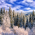 Winter In The Rockies by Dominic Piperata