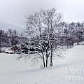 Winter Landscape 6 by Dan Stone