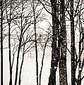 Winter Landscape On Snowy Day by Kim Fearheiley