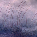 Winter Long Grass by Jean Moore