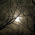 Winter Moon On A Cold Foggy Winter Night by Sven Migot