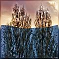 Winter Morning by Blake Richards